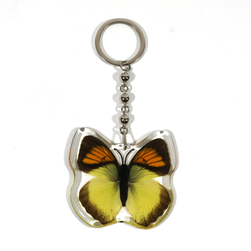 BTK107<br />Yellow Orange Tip<br />