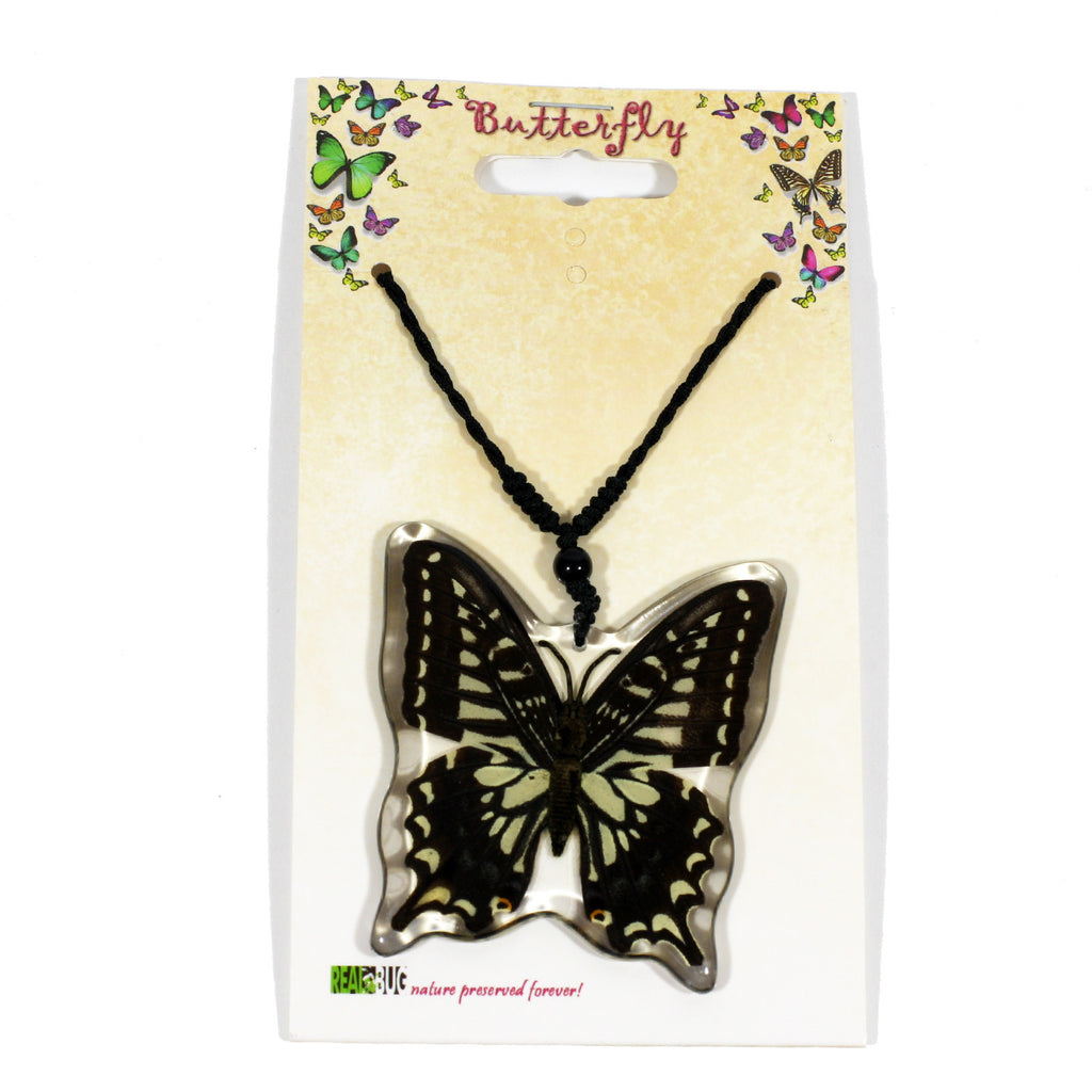 BTN102<br/>Asian Swallowtail