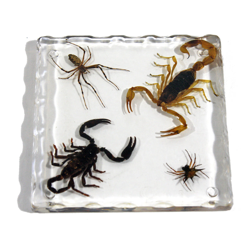 CT5014<br/>Black Scorpion, Scorpion, Spider, & Spiny Spider Coaster