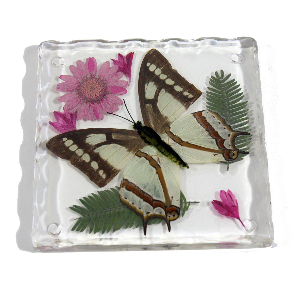 CT5021<br/>Common Nawab Butterfly, Flowers & Leaves Coaster