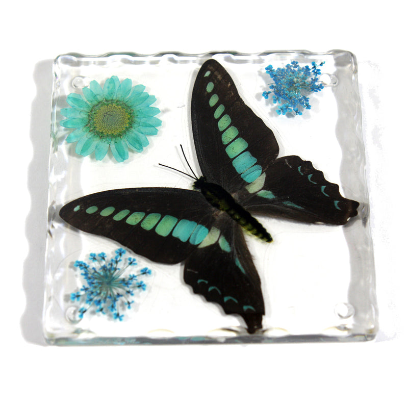 CT5024<br/>Common Blue Bottle Butterfly, Flowers & Leaves Coaster