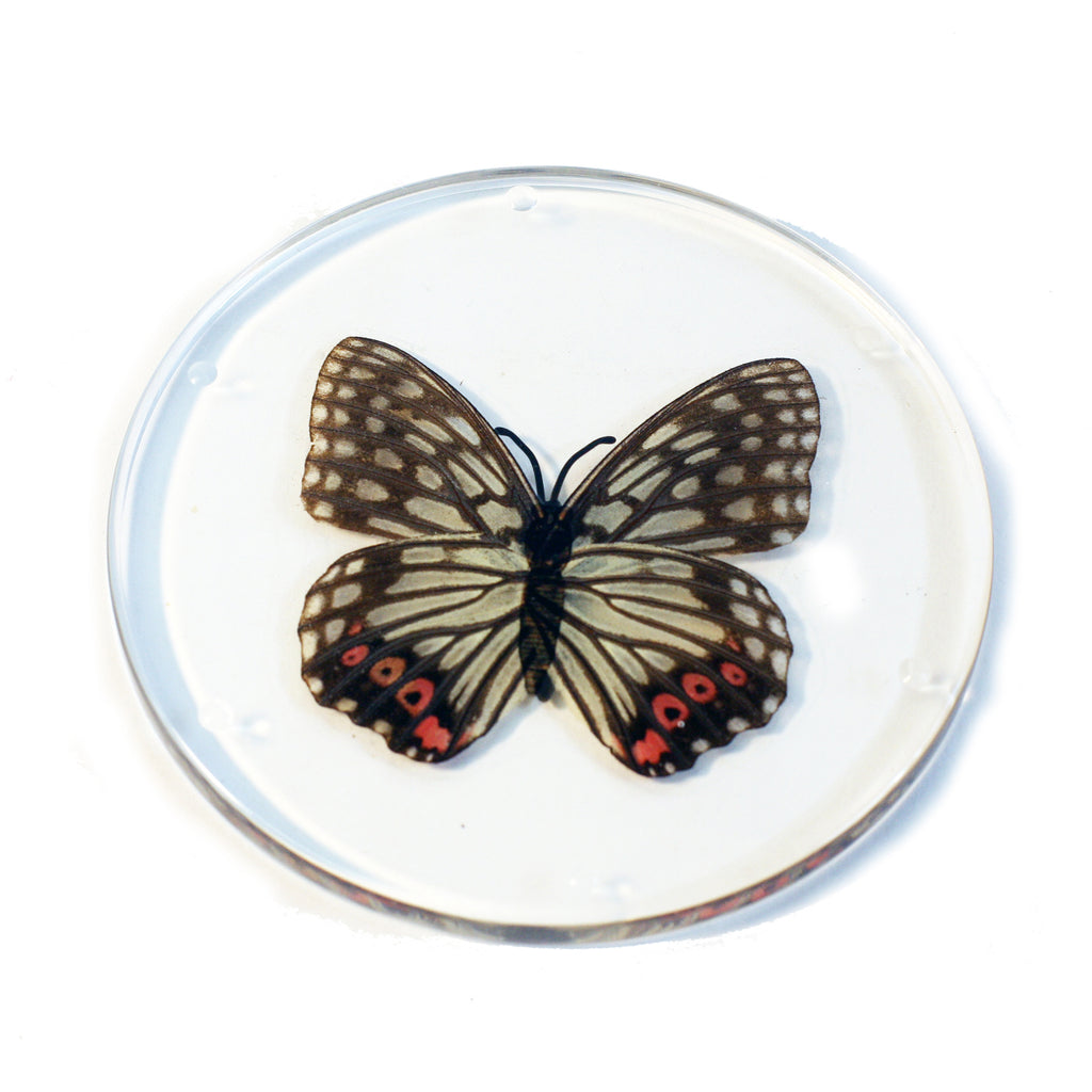 CT8051<br/> Red Ring Skirt Butterfly Coaster