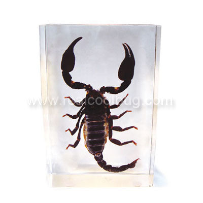 DD24<br />Black Scorpion Desk Decoration