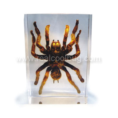 DD30L<br />Large Tarantula Desk Decoration