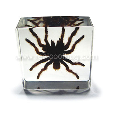 DD30S<br />Small Tarantula Desk Decoration