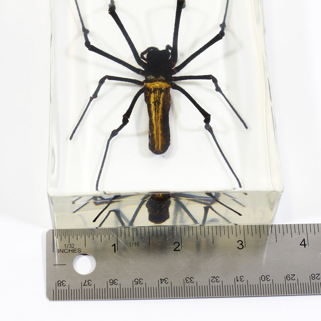 DD33<br/>Golden Orb-Web Spider Desk Decoration
