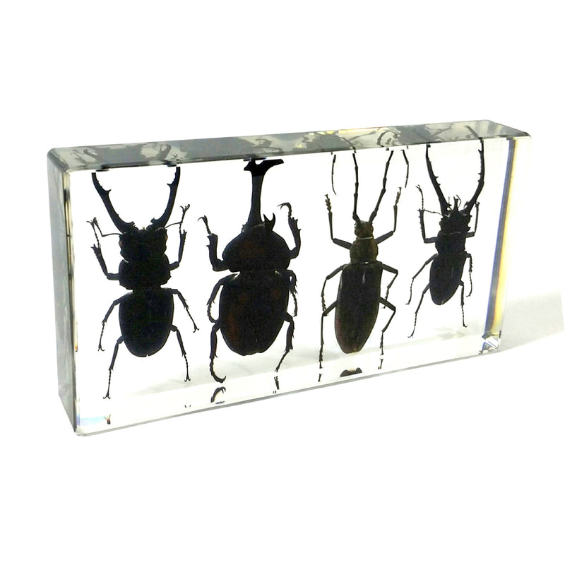 DD38<br />4 Beetles Desk Decoration<br />