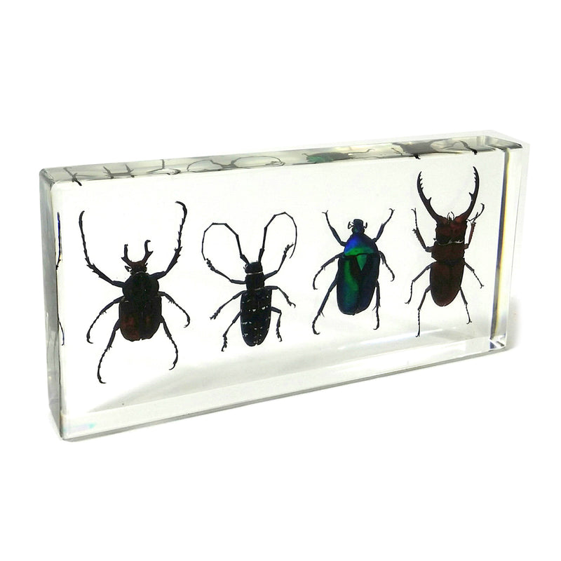 DD39<br />4 Beetles Desk Decoration<br />