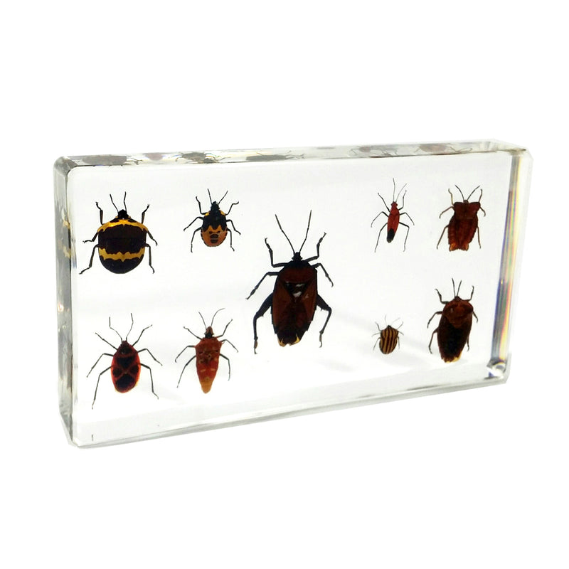 DD40<br />9 Shield Bugs Desk Decoration<br />