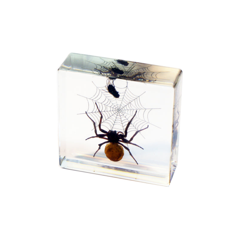 DD45<br/>Spider & Fly Desk Decoration
