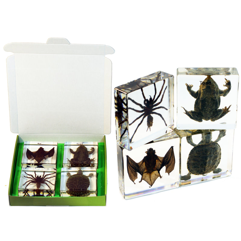 DDC01<br/>Tarantula, Toad, Bat & Turtle Collection