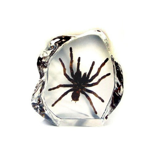 DS1101<br />Tarantula Desk Decoration
