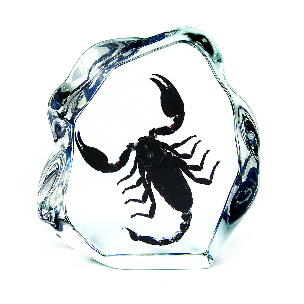 DS1102<br />Black Scorpion Desk Decoration