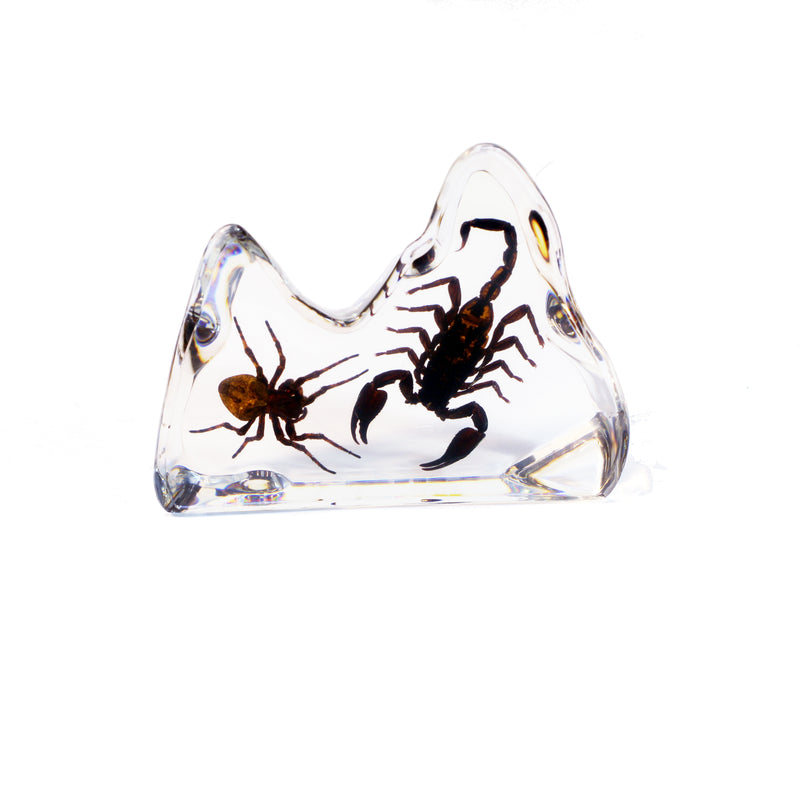 DS1118<br/>Spider & Scorpion Desk Decoration