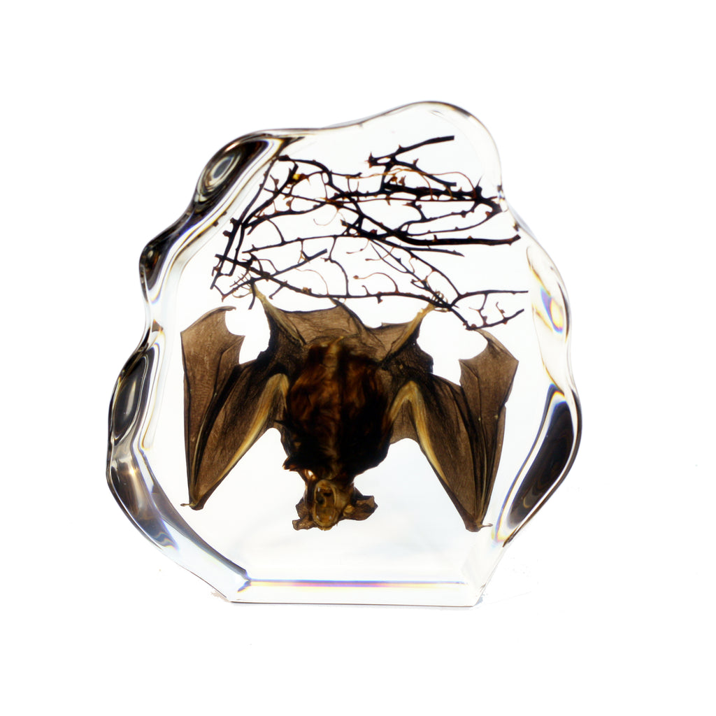 DS1119<br/>Hanging Bat Desk Decoration