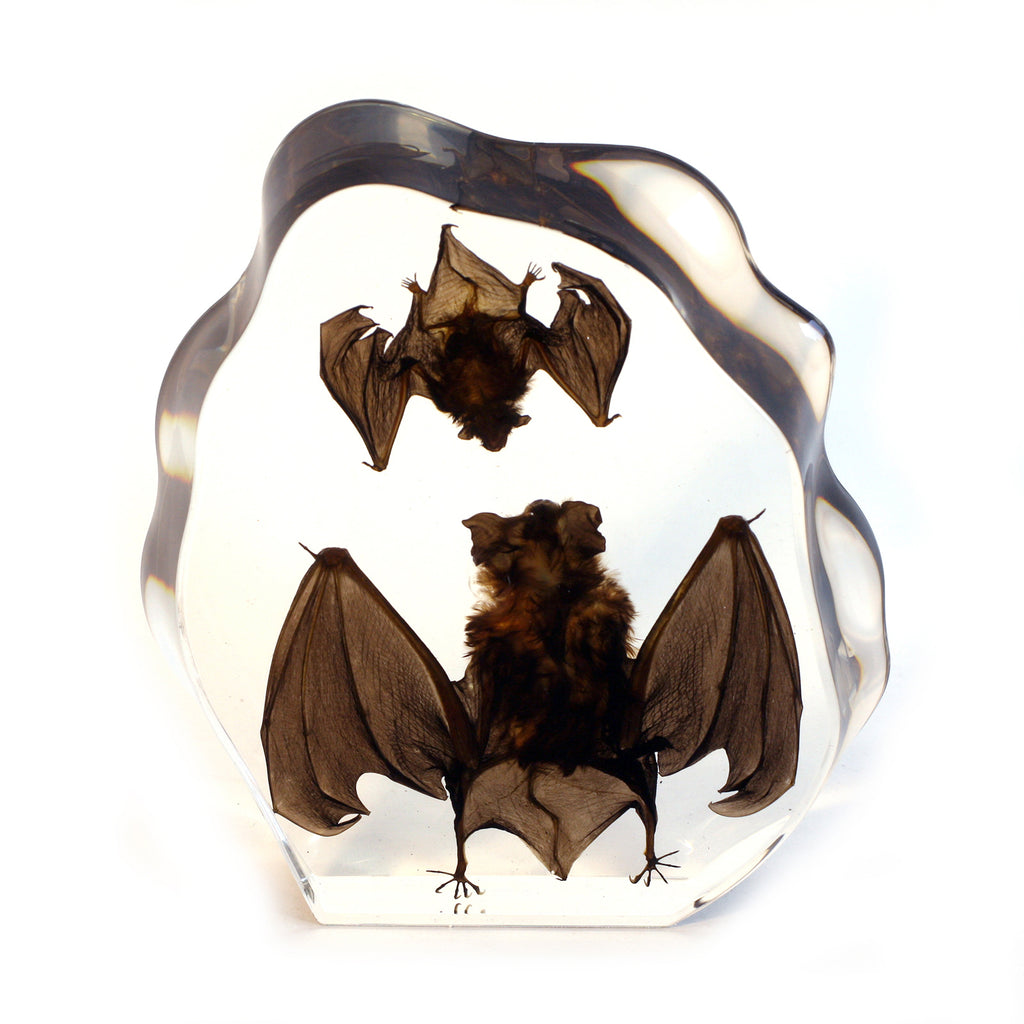 DS1120<br/> Desk Decoration, Two Bats, Clear