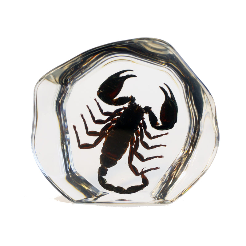 DS3102<br/> Desk Decoration, Black Scorpion, Free Style