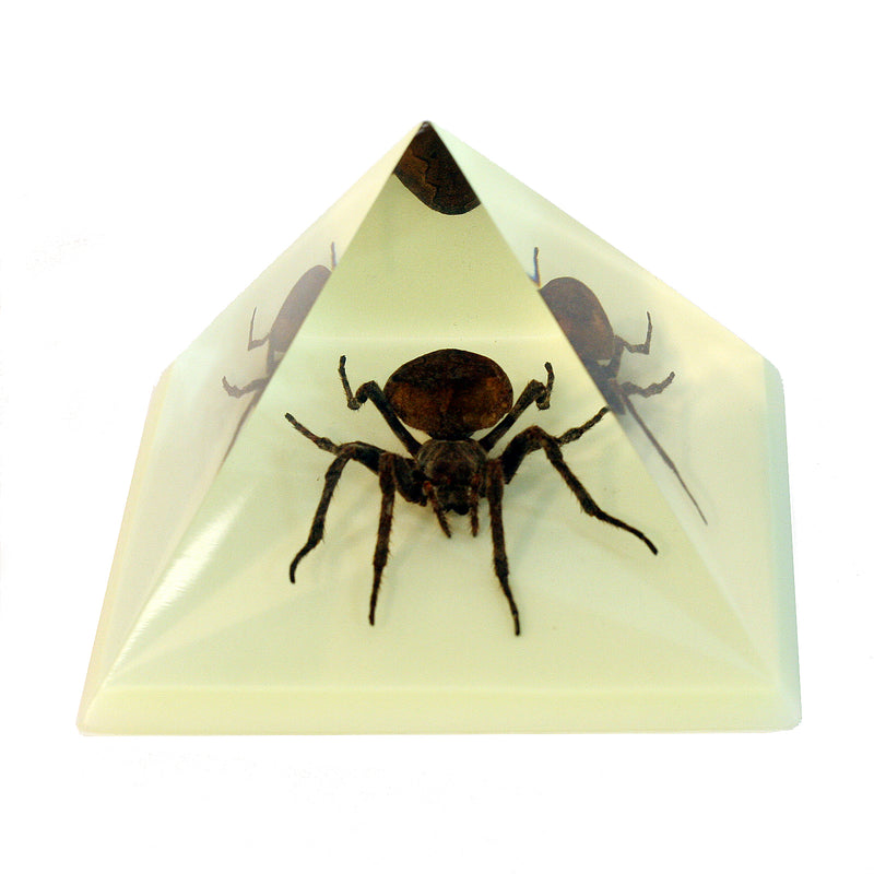 DS903<br/> Pyramid, Spider, Glow in Dark