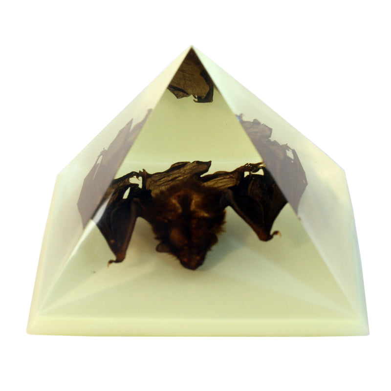 DS904<br/> Pyramid, Bat, Glow in the Dark