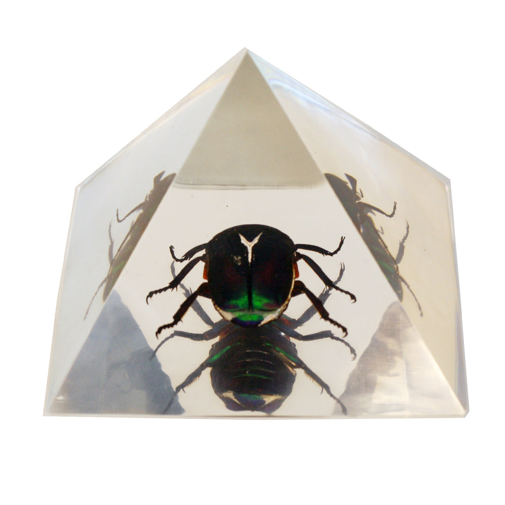DS905<br/> Pyramid, Chafer Beetle, Clear
