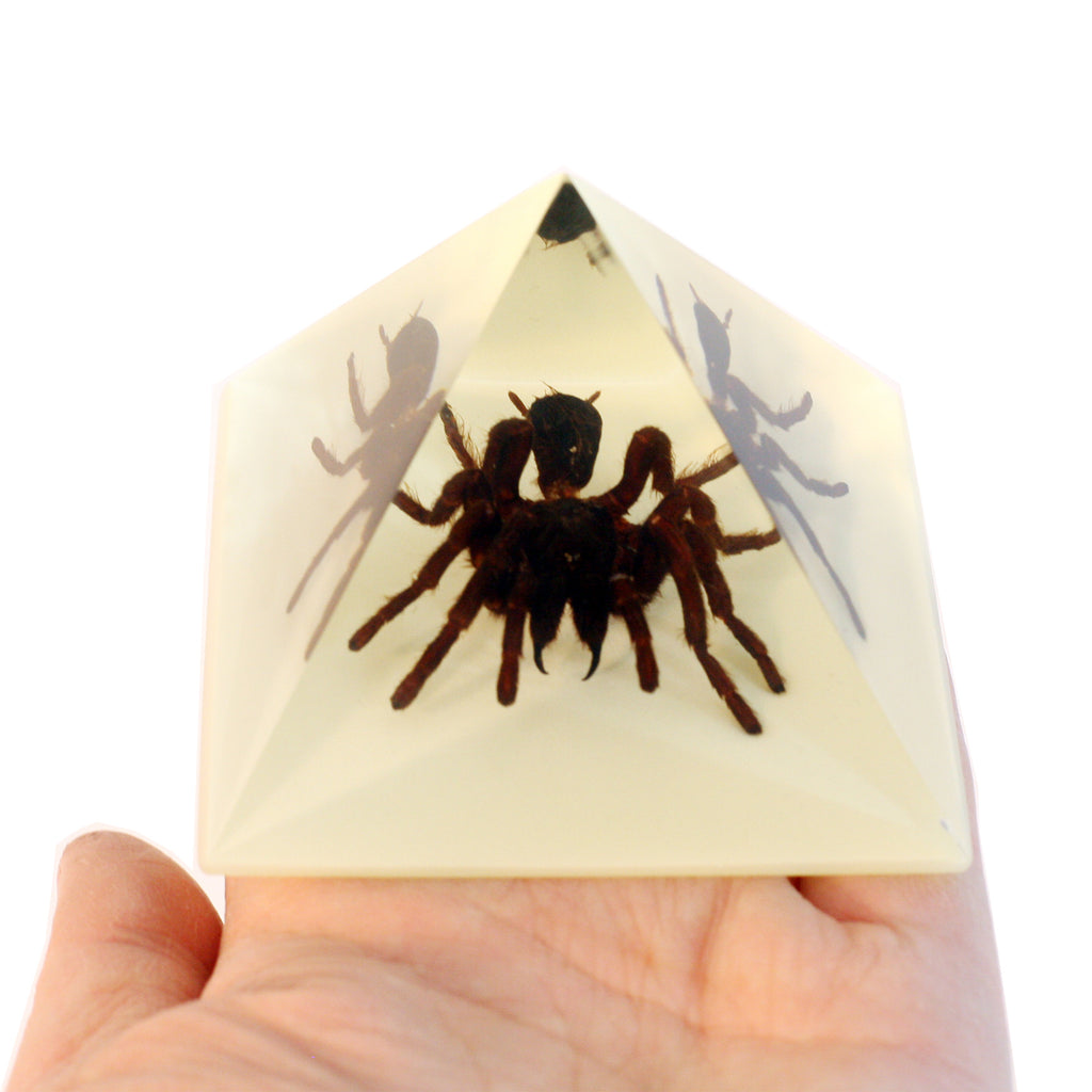 DS906<br/> Pyramid. Tarantula, Glow in Dark