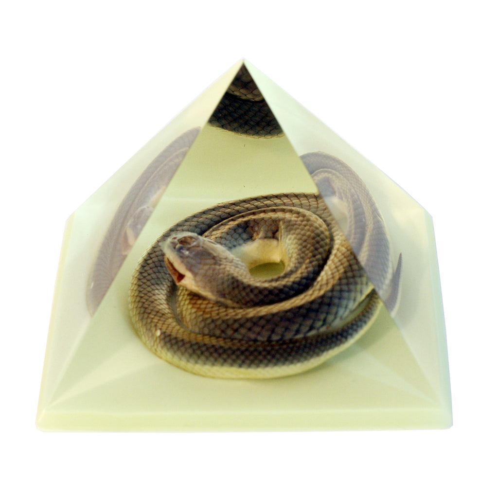 DS907<br/> Pyramid, Snake, Glow in Dark