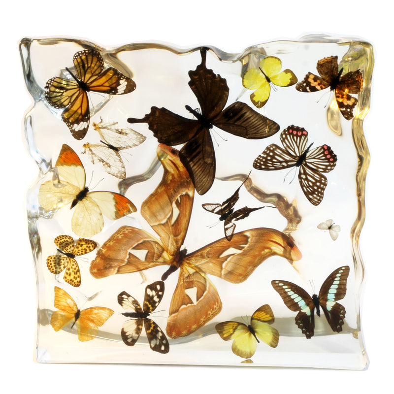 EC015<br/> 15 Butterflies Display