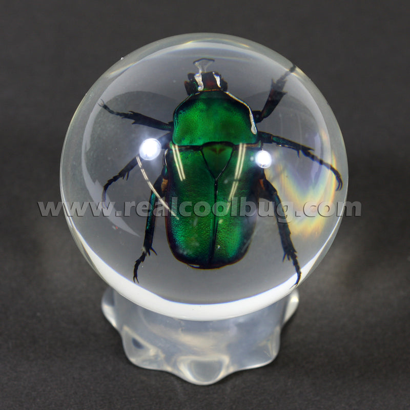 GL01<br />Green Chafer Beetle Globe Desk Decoration