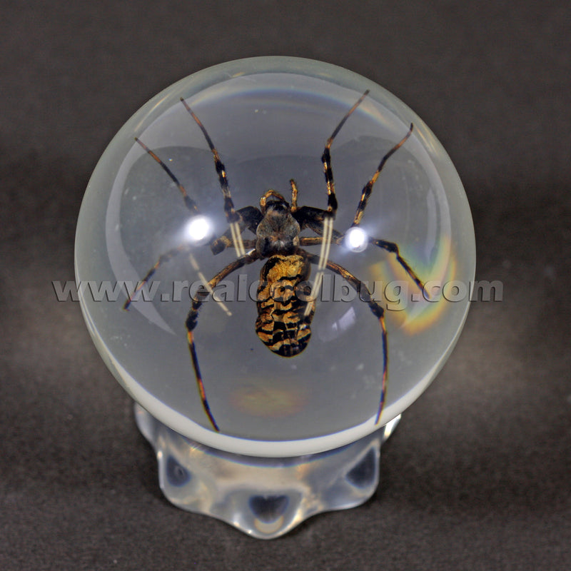 GL07<br />Spider Globe Desk Decoration