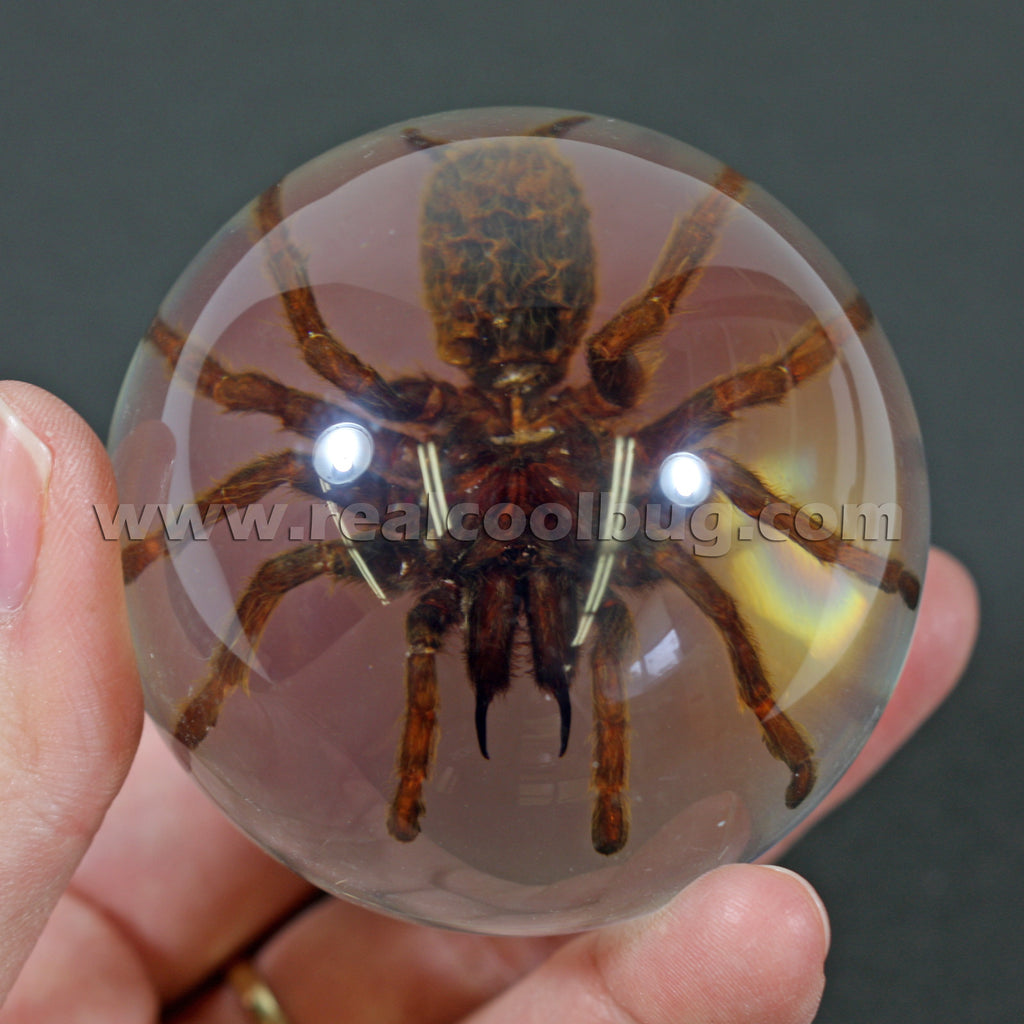 GL09<br/>Tarantula Globe Desk Decoration