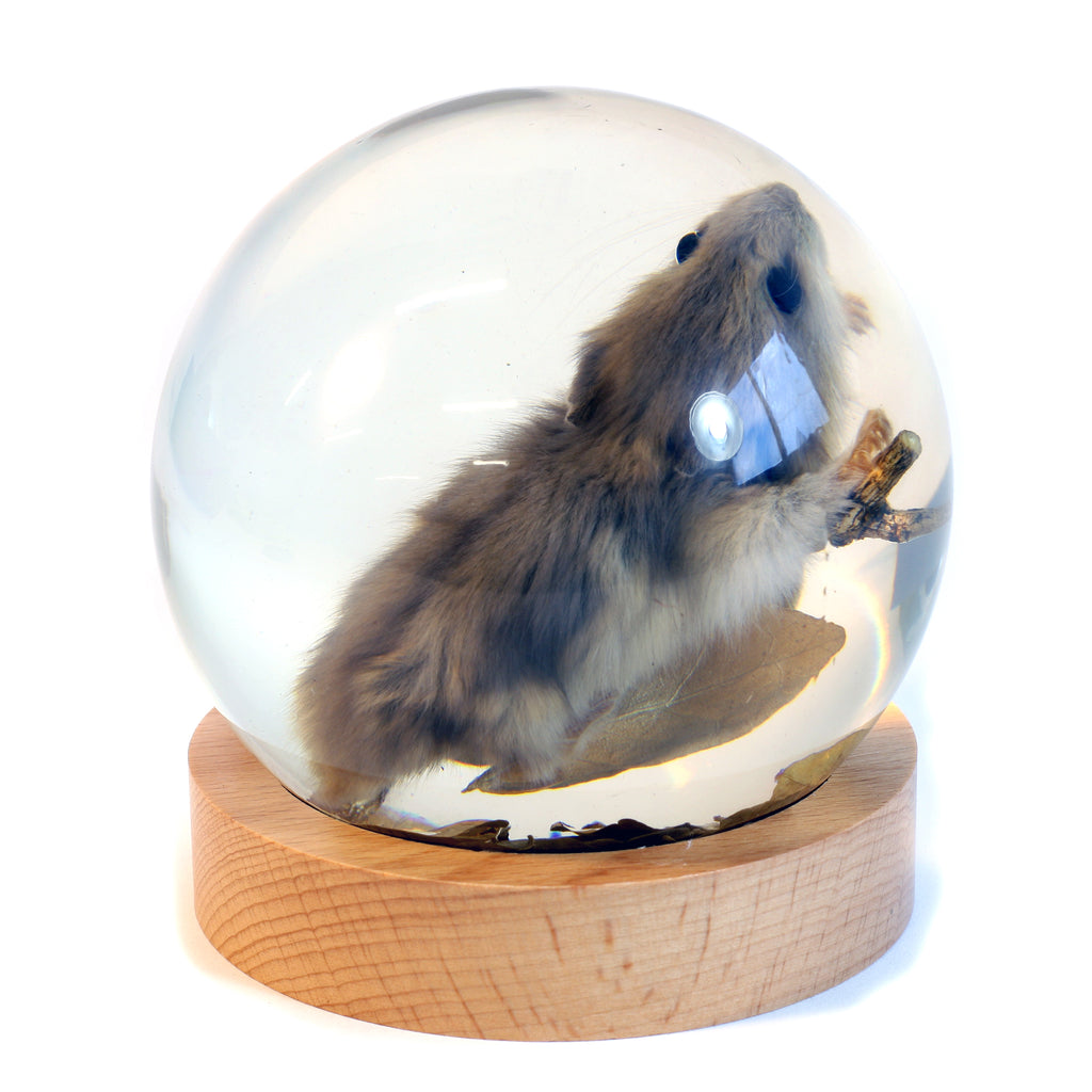GL10020<br /> 4 inch Real Mouse Globe