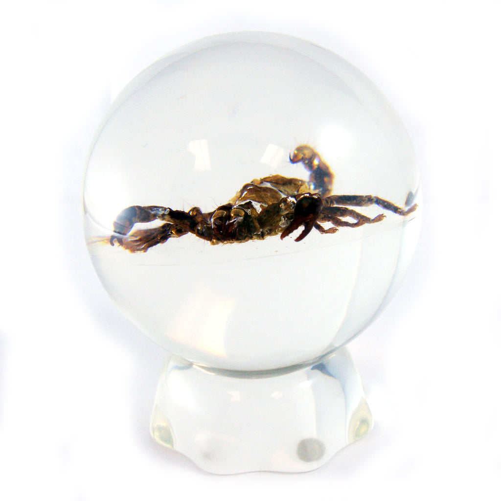 Black Scorpion Globe Paperweight with Pedestal (GL10A)