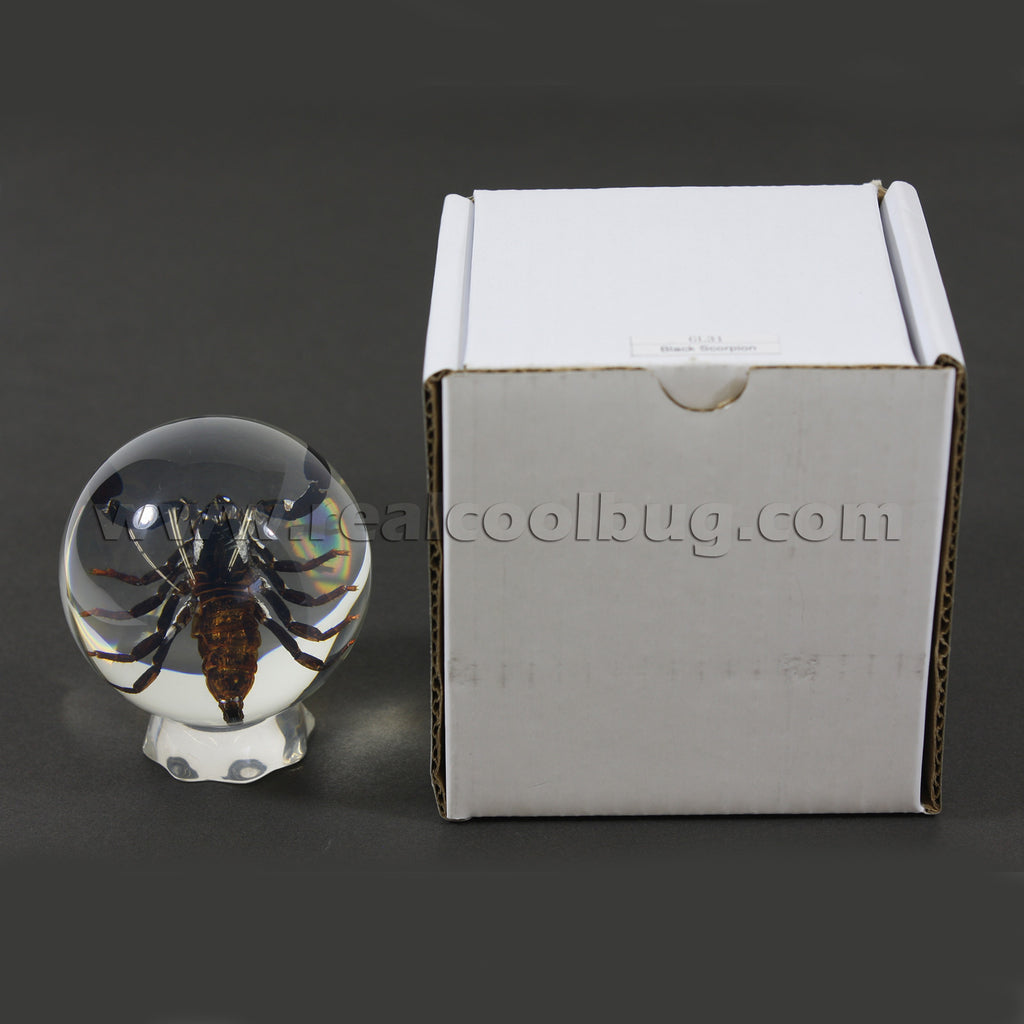 GL10<br/>Black Scorpion Globe Desk Decoration