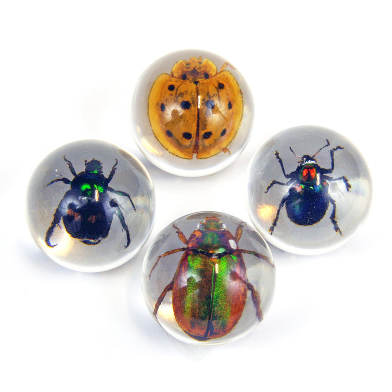 MB2502 4 pc Beetle Marble Set