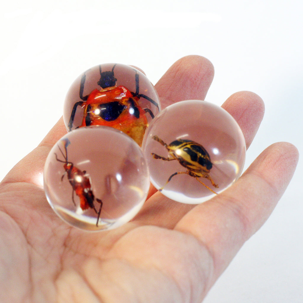 MB3032<br/> 3 Pc Beetle Marble Set