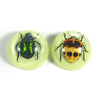 MT3803<br />Beetles