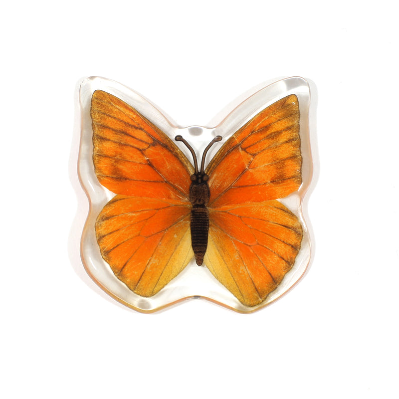 MT503<br />Orange Albatross Butterfly