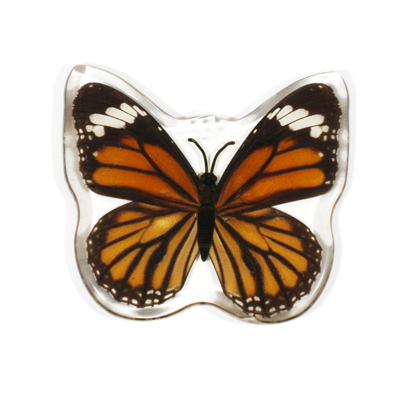 MT506<br />Common Tiger Butterfly