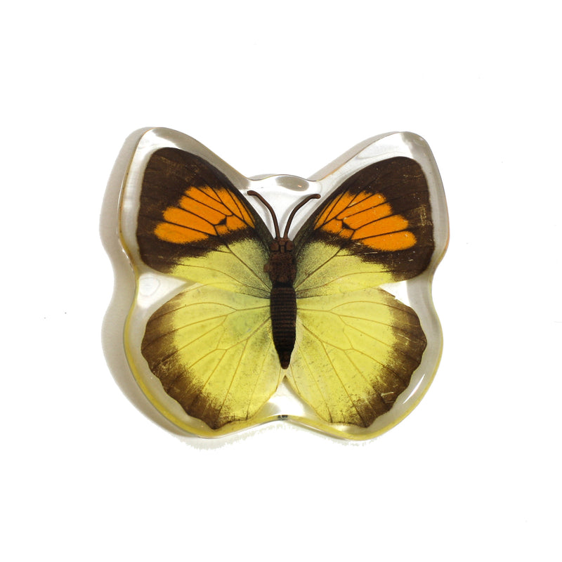 MT507<br/>Yellow Orange Tip Butterfly