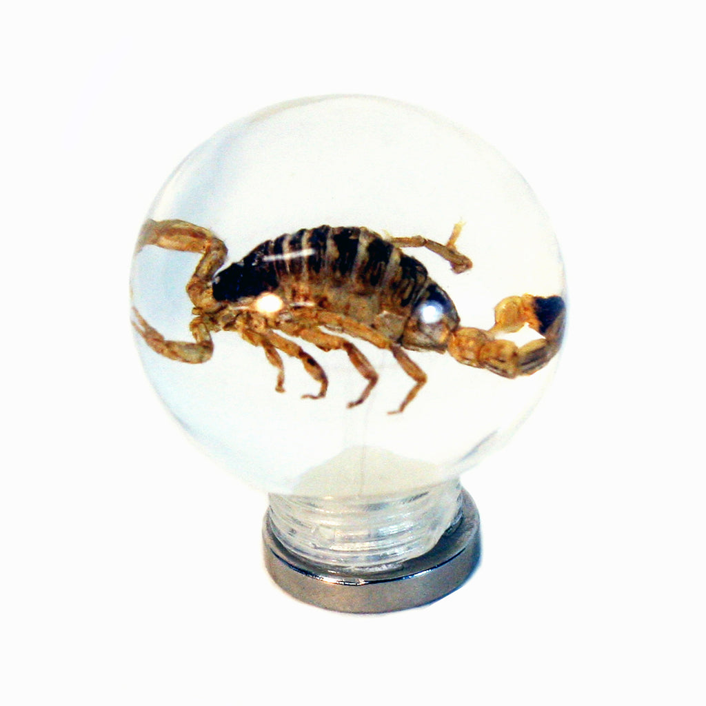 "MT601<br/> 1 1/8"" Marble Magnet - Gold Scorpion"