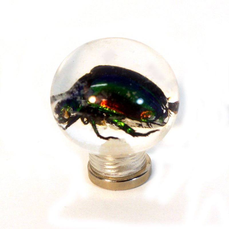 "MT602<br/> 1 1/8"" Marble Magnet - Chafer Beetle"