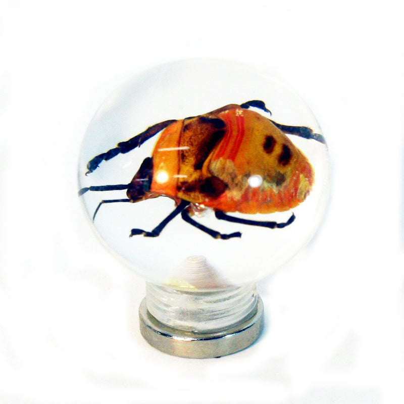 "MT603<br/> 1 1/8 "" Marble Magnet - Shield Bug"