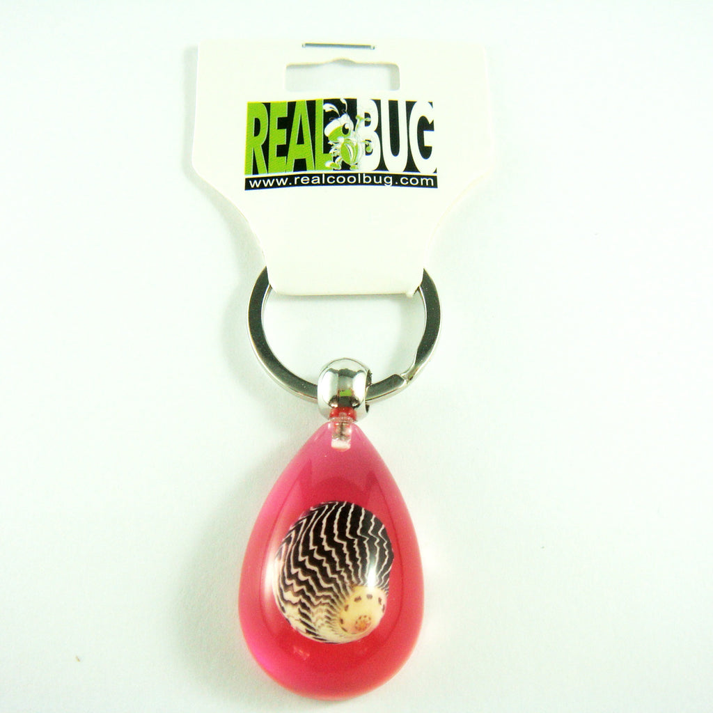 OK206 Pink<br />Zigzag Nerite Shell<br />