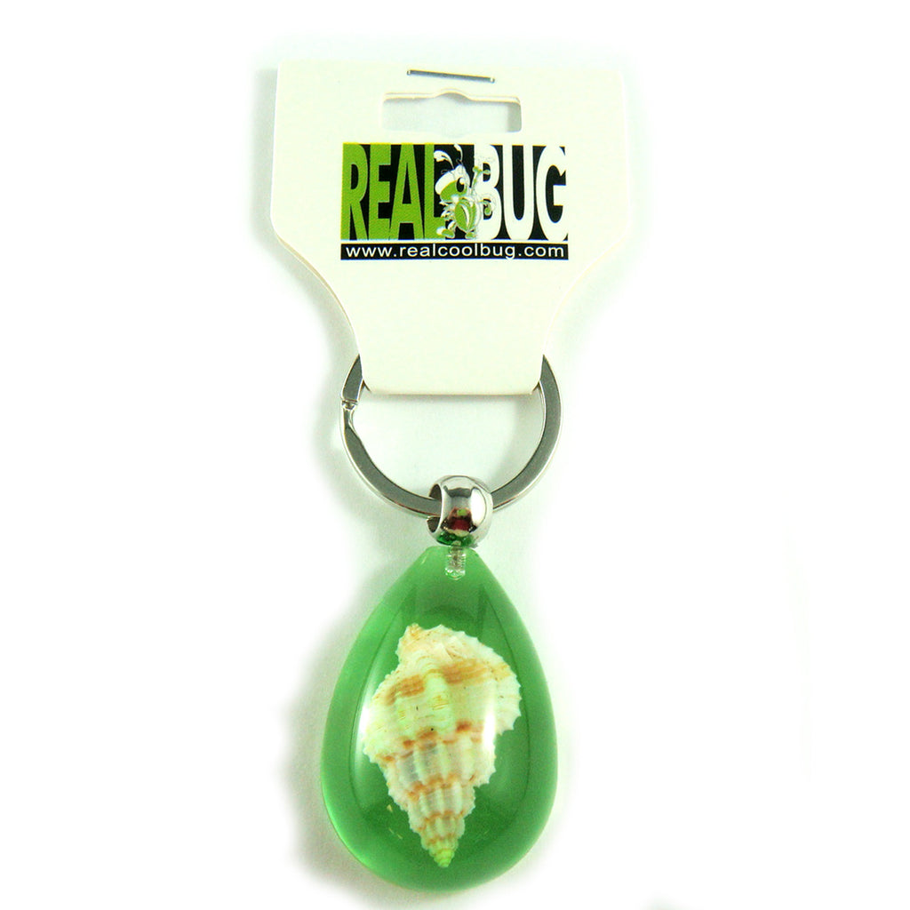 OK209 Green<br />Rugose Mitre Shell<br />