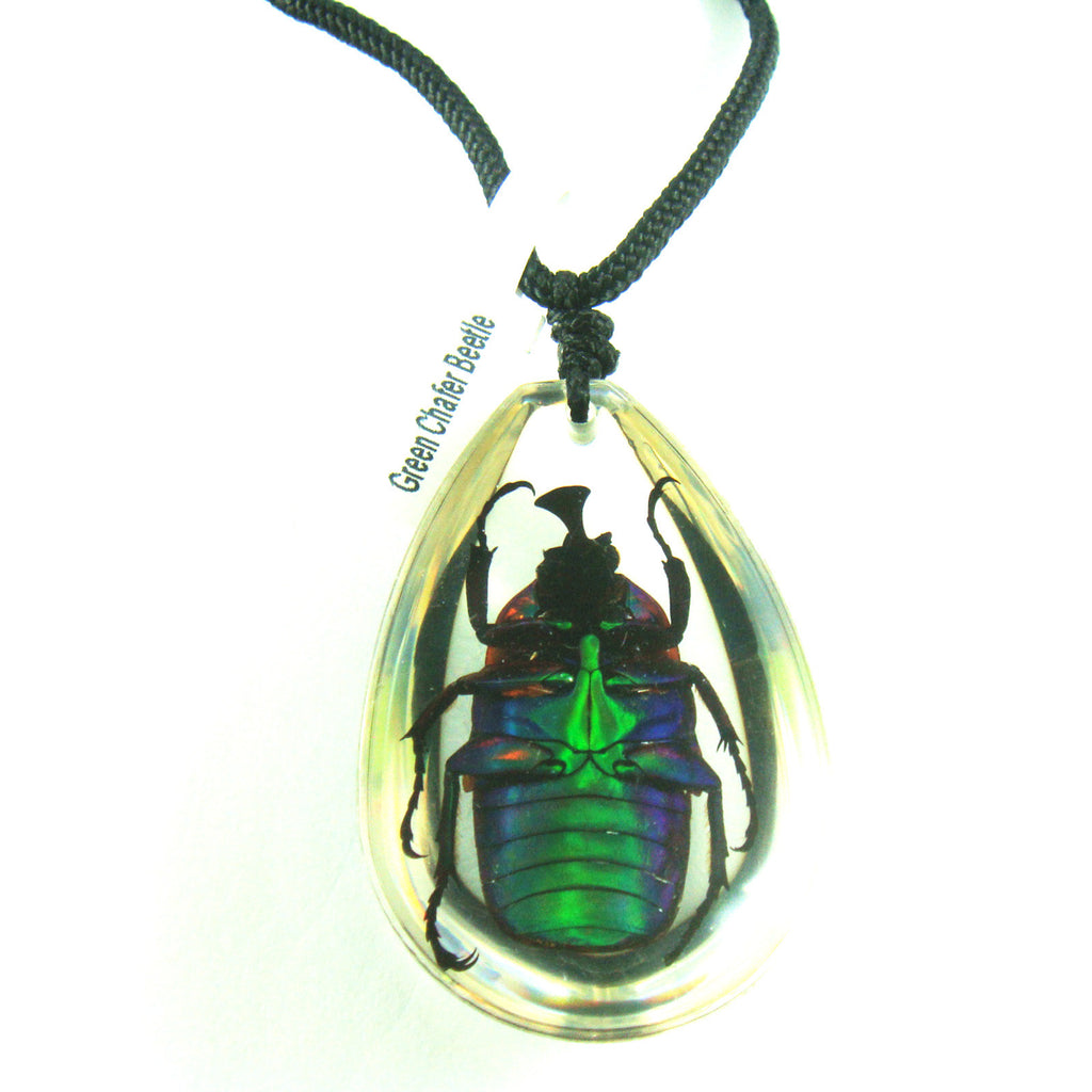 PSB1103<br />Green Chafer<br />Beetle