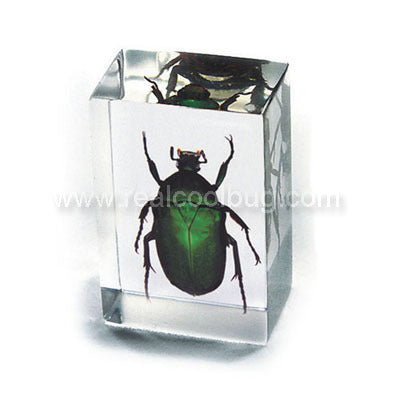 PW112<br />Green Chafer <br />Beetle