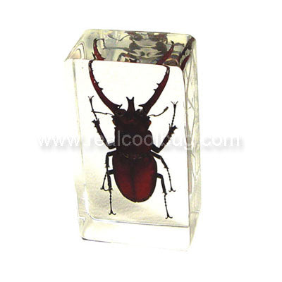 PW203<br />Stag Beetle<br />