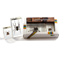 PWC423<br />2 pc Spider Paperweights