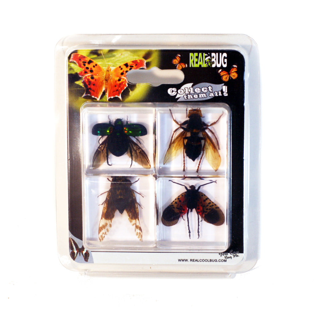 PWC453<br/> 4 pc Flying Insect Collection