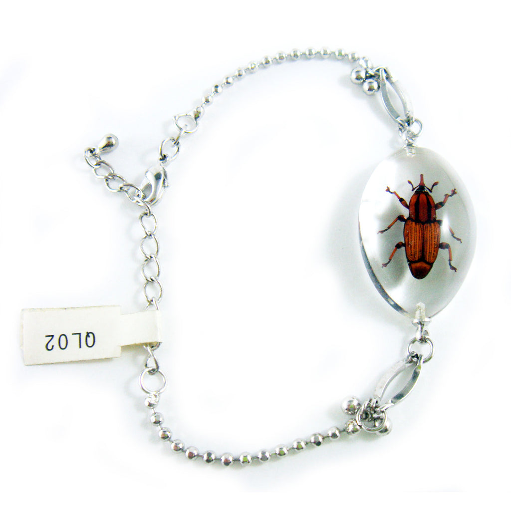 Weevil Oval Bracelet Clear (QL02)